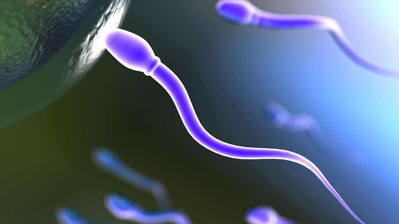 Natürliche IVF-Therapie